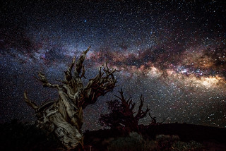 Starry Night Sky High Res California Landscape Milky Way Photography! The California Milky Way in the White Mountains! Long Exposure Astro Photography Milkyway Ancient Bristlecone Pine Forest Dr. Elliot McGucken Fine Art Photography