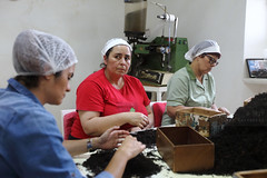 Is it time yet? (Elios.k) Tags: horizontal indoors people three women workers working shortingtea handpicking hairnet tea drytealeaves blacktea greentea pileoftea look teaplantation teafactory fábricadechágorreana chágorreana teaprocessing dof depthoffield foregroundblur interior machine tool background colour color travel travelling june2017 summer vacation canon 5dmkii photography ribeiragrandemunicipality gorreana maia saomiguel sãomiguel acores azores portugal europe