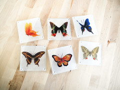 Butterfly Coasters (.godo) Tags: etsy vintage homedecor butterflies butterfly coasters glass rustic forest cabin animals insects bugs woodland cottage morikei morigirl moriboy eclectic boho bohemian kitchen set instantcollection sandblast entomology scientific illustration