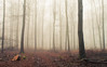 Path of Destruction (Netsrak) Tags: baum bäume eu europa europe forst januar january landschaft natur nebel wald fog forest landscape mist nature tree trees winter woods rheinbach nordrheinwestfalen deutschland de