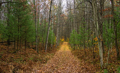 Just a walk in the woods..... (Kevin Povenz Thanks for all the views and comments) Tags: 2017 october kevinpovenz michigan luther upnorth wppd forest trail tree trees pine pinetrees green path canon7dmarkii