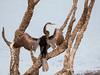Sri Lanka '17_0286 (Jimmy Vangenechten 76) Tags: geo:lat=848217945 geo:lon=7993871430 geotagged indiandarter srilanka ceylon asia azië indianocean indische oceaanwildlifeanimalbirddiervogelwilpattu national parkindian darteranhinga melanogasterindische slangenhalsvogel