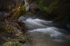 Water (Slávka K) Tags: spring water stream forest torrent moss longexposure outdoor