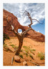 living desert (philippe*) Tags: monumentvalley desert tree nature