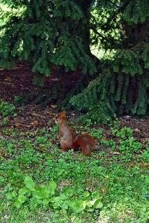 ich habe auch mal ein Eichhörnchen erwischt!