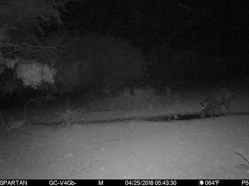 2018-04-25 05:43:30 - Crystal Creek 1