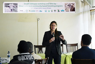 Barbara Rischkowsky, Director, Resilient Agricultural Livelihood Systems, ICARDA, Addis Ababa, Ethiopia presenting at the workshop