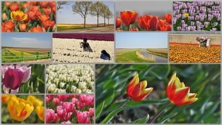 In de Noordoostpolder / In the Dutch polder