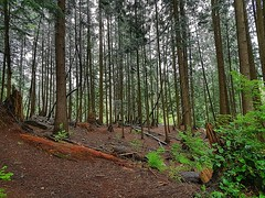 The rainy woods (walneylad) Tags: greenwoodpark northvancouver britishcolumbia canada park parkland woods woodland forest urbanforest rainforest trees trail moss ferns logs green brown rain wet april spring afternoon view scenery nature