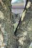 img047 (d_fust) Tags: fust katze cat skorpi tier haustier kätzchen animal кот gato katt 貓 kissa γάτα 猫 kedi macska แมว gatto बिल्ली gatito γατάκι yavrusu 小貓 kitten का बच्चा anak kucing gattino 仔猫 고양이