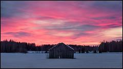 Another pink sky (Jonas Thomén) Tags: sky himmel pink rosa sunset solnedgång barn lada haybarn hölada field åker moln clouds skog forest woods snow snö winter vinter hdr panorama 2x3exp