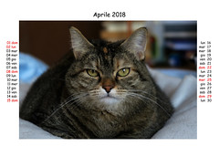 April 2018 (Alfredo Liverani) Tags: 7dayswithflickr 7dwf fauna europa europe italia italy italien italie emiliaromagna romagna faenza faventia faience animal kitten gatto gatta gatti gatte cat cats chats chat katze katzen gato gatos pet pets tabby furry kitty moggy moggies gattino animale ininterni animaledomestico aliceellen alice ellen calendario calendar kalender canong5x canon g5x pointandshoot point shoot ps flickrdigital flickr digital camera cameras