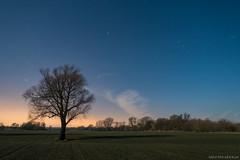 goodbye wintertime (Piotr Potepa) Tags: sirius orion aldebaran pleyades night sky stars winter nightscape nightscapes poland tree piotrpotepa landscape