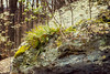 Garden In The Forest (beyond_the_sea01) Tags: nps catoctinmountainpark fern moss boulder lichen sunlight spring