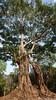 Prasat Yeay Puon Group, Sambor Prei Kuk (Travolution360) Tags: cambodia sambor prei kuk prasat yeay puon group ancient history ruins nature forest tuktuk khmer ways travel