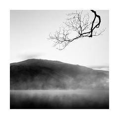 Veiled (Nick green2012) Tags: landscape blackandwhite square mist tree silence