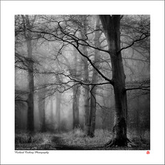 Creech Woods (Chalky666) Tags: tree trees wood woodland forest fog mist hampshire landscape mono art