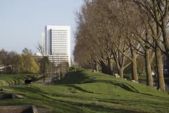 Hoofddorp, Geniedijk (Hans Westerink) Tags: hoofddorp noordholland nederland nl stelling amsterdam waterlinie haarlemmermeer bomen schapen sheep lambs hanswesterink unesco