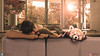 sleeping panda catches no poultry (Jangra Works) Tags: panda pandas pandalover redpanda animalslover animals animales zorro sleep sleeping animalsleeping morning house natural kumarsedit creative manipulation artwork artistic friends bestbuddies indiaphotosociety instalike picoftheday indiananimals instantclick photoshop photographychallenge