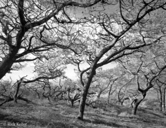 (Analog_Photographer) Tags: light sidelighting shadows contrast textures trees torreypine landscape torreypinesstatenaturalreserve sandiego coastalcalifornia analog film negativefilm printfilm sheetfilm blackandwhite ilforddeltapro100 deepyellowfilter wratten15 hoyay52 43aspectratio largeformat 4x5 viewcamera fieldcamera ikedaanba filmcamera nikkorsw wideangle northcoastphotographicservices epsonv850