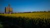 Fields - Colza (Frederique Triffaux) Tags: fields pentaxart pentaxk1 laboisse auvergnerhônealpes france fr colza jaune yellow flowers sky landscape