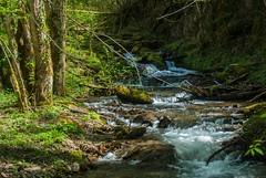 Ruisseau de Rouze (Ariège) (PierreG_09) Tags: ariège pyrénées pirineos couserans midipyrénées occitanie ruisseau rivière torrent coursdeau rouze ustou couflens