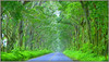 THE TUNNEL OF TREES, KAUAI, HAWAII (Gary Post) Tags: thetunneloftrees kauai hawaii