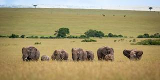 I love those elephants!