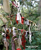 Madron Well Clooties hanging from tree branches (Homer Sykes) Tags: madron holywell well cornwall votive offerings cornish pagan nobody britain uk british travelstock celticbritain mysteriousbritain england english christianised clootiewell