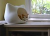 Otis in the cat head bed (rootcrop54) Tags: otis dilute orange ginger tabby male cat whiskascatheadbed whiskaspromotion cathead bed window bokeh tabletop neko macska kedi 猫 kočka kissa γάτα köttur kucing gatto 고양이 kaķis katė katt katze katzen kot кошка mačka gatos maček kitteh chat ネコ