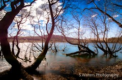 Catleugh Reservoir (sidrog28) Tags: trees lake long exposure reservoir sunny uk