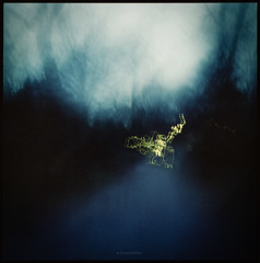 Spaziergang auf dem Friedhof zur blauen Stunde (Konrad Winkler) Tags: friedhof berlin nacht bäume licht langzeitbelichtung weg schatten abstrakt mittelformat 6x6 kodakportra800 hasselblad503cx epsonv800 expired
