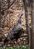 Surprise...! (Portraying Life, LLC) Tags: dbg6 da3004 hd14tc k1 michigan pentax ricoh unitedstates bird closecrop handheld nativelighting urban neighborhood