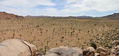 Joshua Tree National Park (CahillNH) Tags: panoramic ca california joshuatreenationalpark nikon d3200