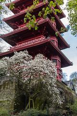 Printemps fleuri (Inti Runa) Tags: canoneos5dmarkiv sigma50mm14dghsmart tourjaponaise brussels pagode tourism flowers