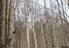 Arbor genere illusio (kentkirjonen) Tags: canon 80d sweden sverige dalarna ue explore utforska cold winter vinter snow snö kallt wood trä struktur structure nature natur tree trees träd bird illusion fågel
