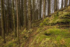 On The Right Track (Click And Pray) Tags: managedbyclickandpraysflickrmanagr downhill scotland argyll horizontal landscape trees forest marker ardentinny downhillscotlandargyllhorizontallandscapetreesforestmarkerardentinnygbr
