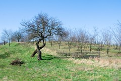013_Moravian_Tuscany (Overtherainbow changes to KV Photography) Tags: katerinavodrazkova kvphotography landscape moravsketoskansko morava krajina moraviantuscany jiznimorava southmoravia moraviantoscana šardice