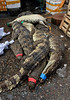 Slaughtered Alligators (cowyeow) Tags: disturbing herp herpetology harsh herps guangdong asianculture food asian alligator chinesefood guangzhou china chinese asia slaughter reptile cruel cruelty dead death bodies