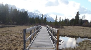 Bow Valley Nature Walks