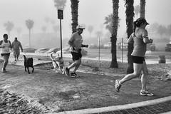 R0052190_bw (A.C.Elliott) Tags: dog oceanbeach beach sandiego jogger people path