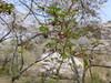 18o7939 (kimagurenote) Tags: 桜 sakura cherry blossom prunus cerasus flower tree 多摩森林科学園 tamaforestsciencegarden 東京都八王子市 hachiojitokyo