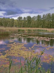 LakenheathFenNo58 - Copy (iankellybn26dj) Tags: water wetland landscape trees photo england hampshire