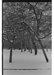 P61-2018-036 (lianefinch) Tags: argentique argentic analogique analog monochrome blackandwhite blackwhite bw noirblanc noiretblanc nb nature neige snow winter hiver white blanc noir arbre tree garden jardin paris