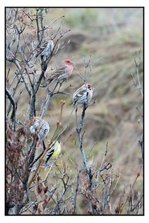 Cold Spring Birds