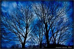 Lace...II (SHADOWY HEAVEN Aya) Tags: 14112970s0030 tokyocameraclub igers igersjp phosjapan picsjp 日本 北海道 ファインダー越しの私の世界 写真好きな人と繋がりたい 写真撮ってる人と繋がりたい 写真の奏でる私の世界 空 木 樹 coregraphy japan hokkaido outdoor landscape paysage sky tree trees blue air baum arbre