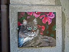 Brolo e i suoi gatti dipinti (frank28883) Tags: brolo nonio verbanocusioossola cusio lagodorta ortalake gatto gatti cats chat chats gato gatos