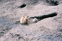 3987099 (grindove) Tags: djur kanin kaniner ornö