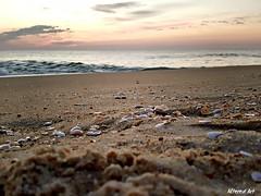 """Sunrise over the Atlantic"" Fenwick Island, Delaware (delmarvausa) Tags: fenwickislandde fenwickislanddelaware fide fenwickisland southerndelawaware delmarva delmarvapeninsula firststate delaware eastcoast coastaldelmarva midatlantic fideusa delawarebeaches visitdelaware exploredelmarva coastaldelaware townsofdelmarva delawarebeachtowns beach sunrise seashells sand shore sea ocean beachlife beaches"