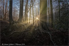 Quan el Sol il·lumina el bosc. (Montseny - Catalunya) (Antoni G.V.) Tags: bosc nikon d800 montseny catalunya cataluña catalonia antoni gallart 2018 color sol sun bosque forest dawn sunrise alba amanecer destello flaix spark flash arbres arboles trees contrallum contraluz backlighting state raices arrels wonderful precioso meravillos madrugada matinada earlymorning leaves hojas pampols sky cel cielo